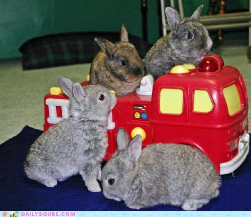 Babies,bunny,bus,Hall of Fame,happy bunday,rabbit,toy car