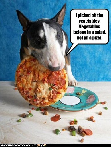 bull terrier dogs noms pizza snack veggies
