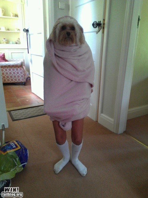 clever dogs illusion towel walking - 6434290432