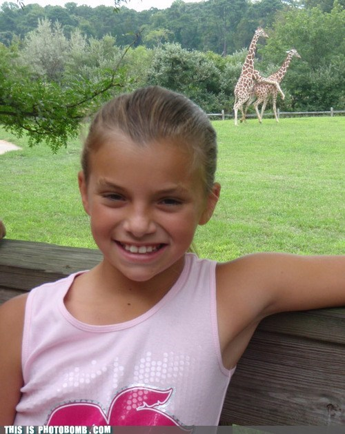 Animal Bomb,animals,giraffes,kid,Perfect Timing