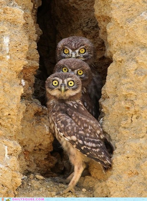 up to no good,Owl,trouble makers,bird,squee