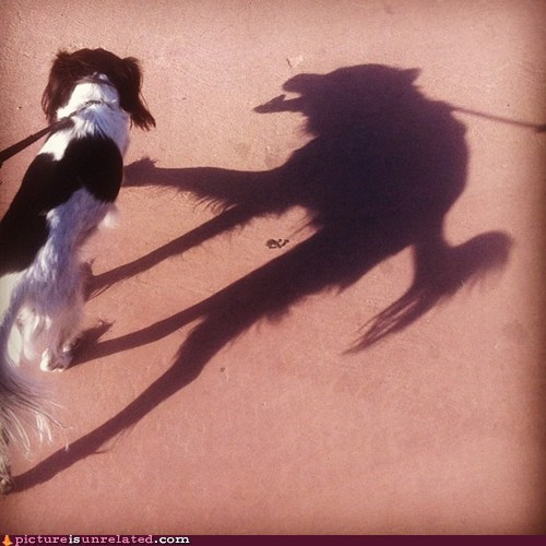 beastly,best of week,creepy,dogs,shadow,wtf