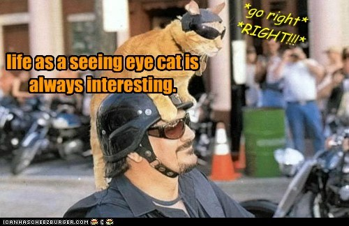 life as a seeing eye cat is always interesting. *go right* *RIGHT!!!*