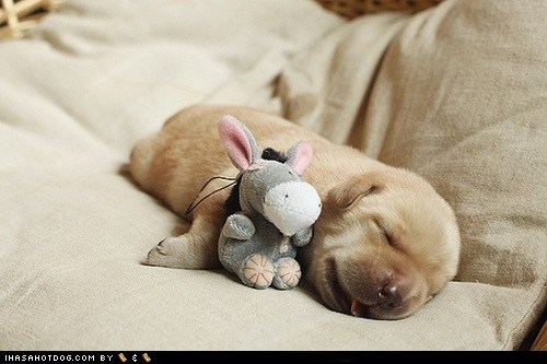 cuddle cyoot puppy ob teh day eeyore nap puppy sleeping what breed winnie the pooh - 6434405888
