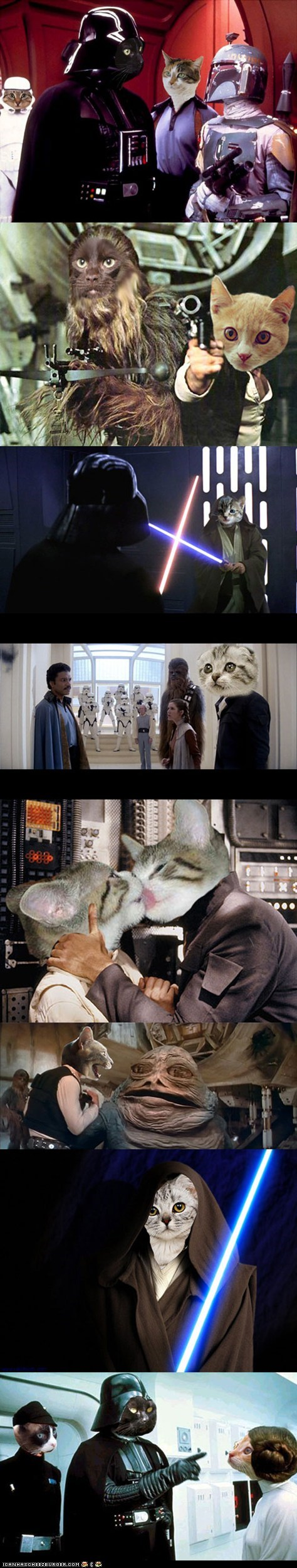 best of the week Cats movies multipanel photoshopped star wars - 6434566656
