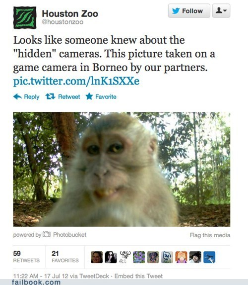 camera,failbook,g rated,monkey,smile,tweet,twitter
