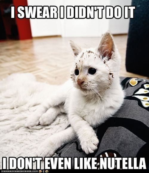 captions Cats chocolate guilty lies lolcats lying messes messy nutella