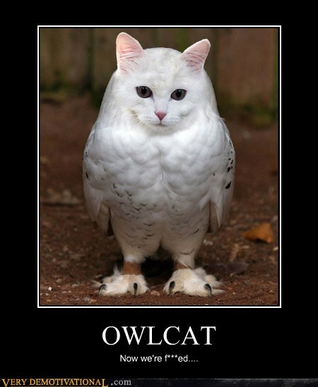 cat,hilarious,Owl,photoshop