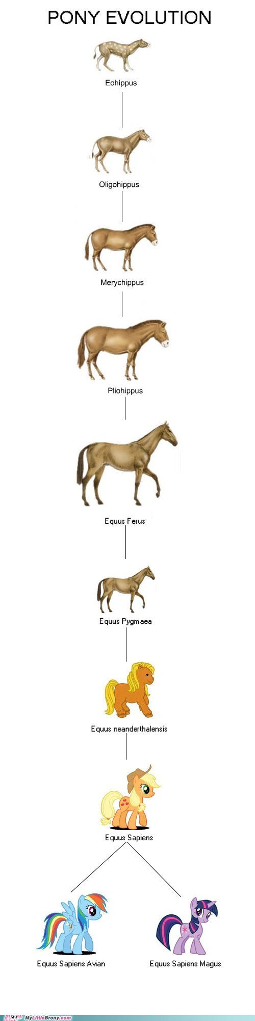 evolution gen 4 ponies the internets - 6435502592