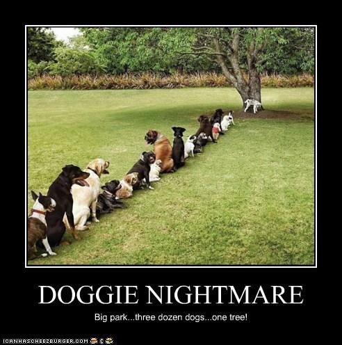 DOGGIE NIGHTMARE Big park...three dozen dogs...one tree!