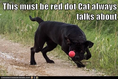 ball,ball.,captions,cat,dogs,laser,red dot,what breed