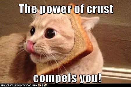 best of the week bread captions Cats crust face inbread pun - 6435939072