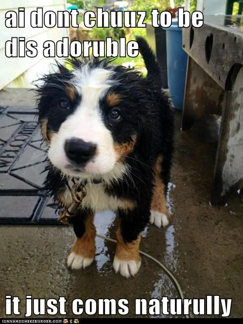 cute dogs naturally puppy st bernard wet - 6435942400