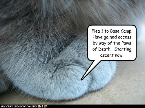 captions Cats mountain paw - 6436061952