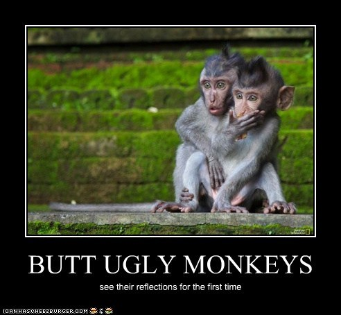 BUTT UGLY MONKEYS see their reflections for the first time