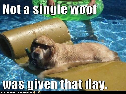 beer captions dogs dogs dressed up floaty golden retriever i-dont-give-a-darn sunglasses swimming pool - 6436435968