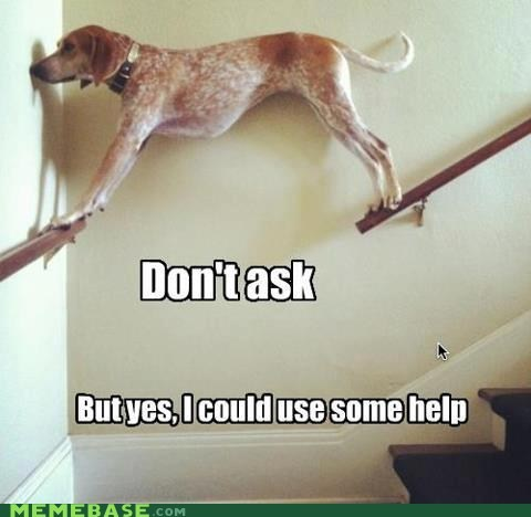 dogs dont-ask help - 6436517120