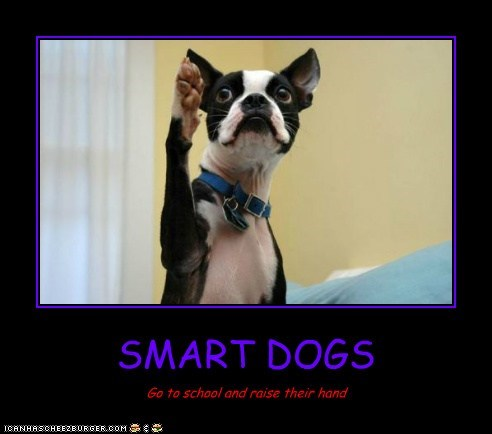SMART DOGS Go to school and raise their hand