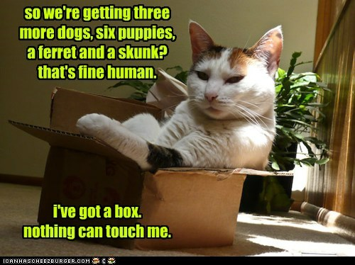box,captions,Cats,horde,pets,safe