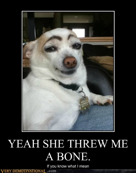 dogs eyebrows hilarious wtf - 6436864000
