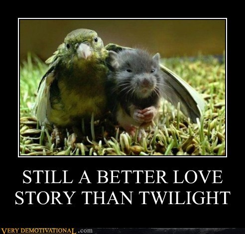 bird,hilarious,mouse,twilight,wtf