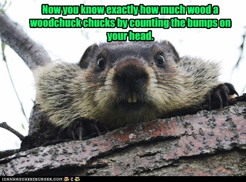 Now you know exactly how much wood a woodchuck chucks by counting the bumps on your head.