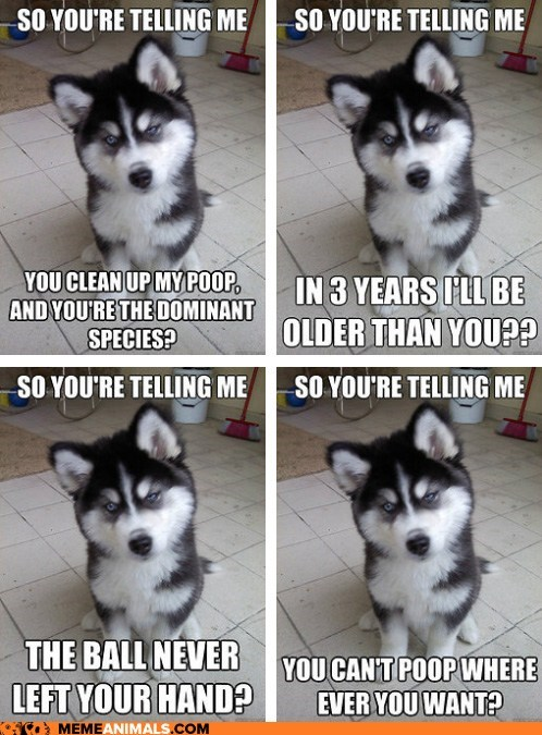 husky meme puppy Skeptical Newborn Puppy - 6437312000
