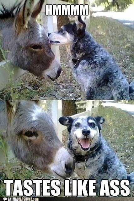 ass best of the week captions dogs donkey Hall of Fame lick pun smile tastes like - 6437353984