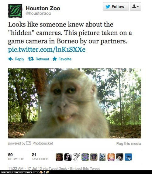 cameras found hidden camera monkeys mugging smiling