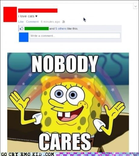 Cats crazy cat lady facebook nobody cares SpongBob InnuendoPants weird kid - 6437613312