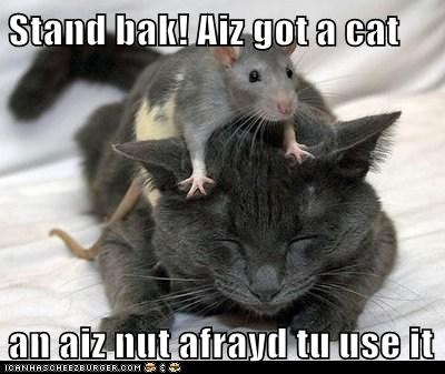cat im-not-afraid mouse pointing stand back threat weapon - 6437617920