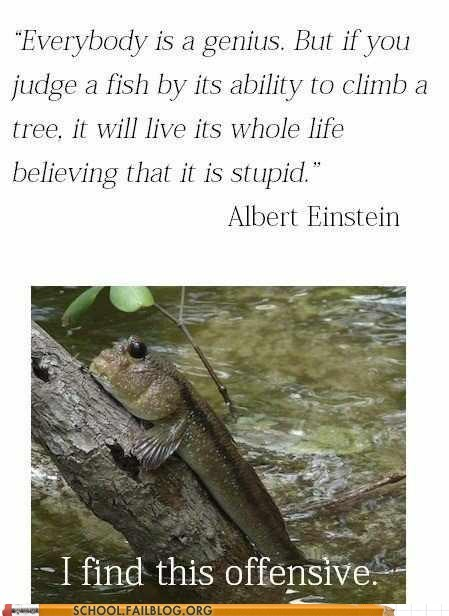 albert einstein climbing a tree everybody is a genius i find this offensive - 6437640704