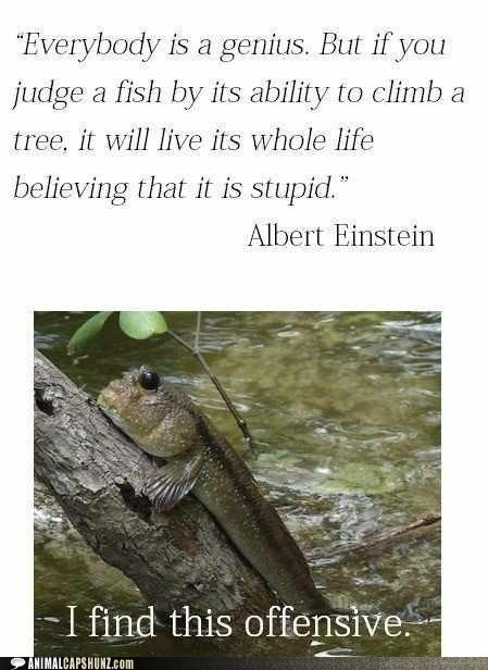 ahem,albert einstein,climbing a tree,excuse me,fish,offensive,quote