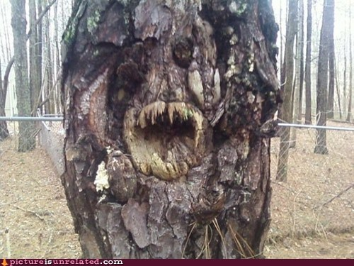 Damn Nature U Scary,teeth,tree,wtf