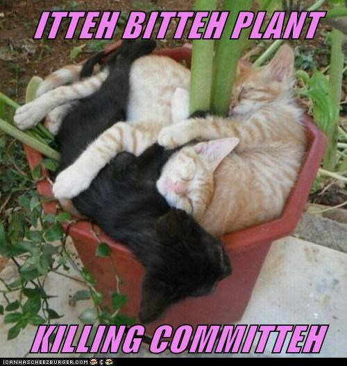 captions Cats green thumb itty bitty kitty committe itty bitty kitty committee kill murder pile plant potted plant sleep