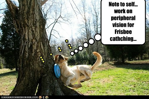Note to self... work on peripheral vision for Frisbee cathching... * ** ** * ***