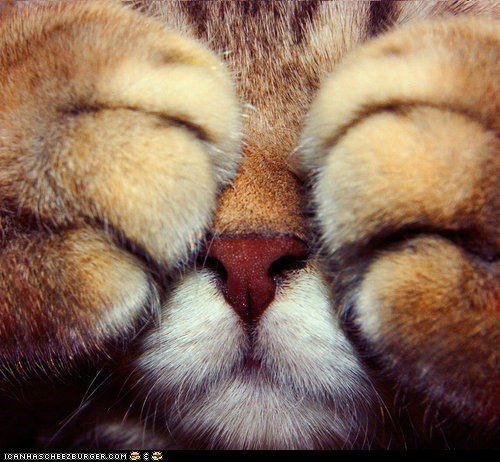 Cats closeups cyoot kitteh of teh day hiding kitten paws peek a boo - 6438228736