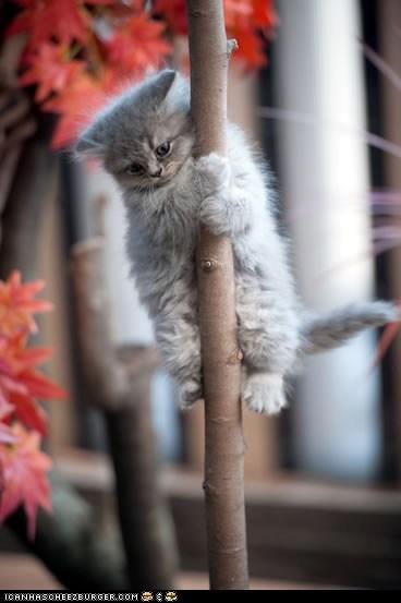 Cats climbing cyoot kitteh of teh day firemen kitten poles sliding stuck trees