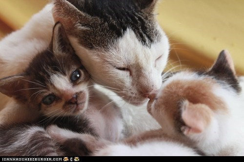 Cats cyoot kitteh of teh day families kitten moms newborns - 6438244864