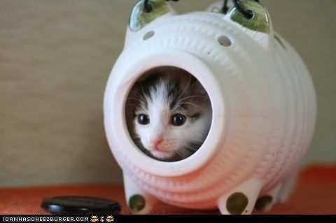 Cats cyoot kitteh of teh day hiding inside kitten money piggy bank - 6438252032