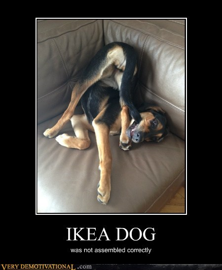 assembled,dogs,idiots,ikea