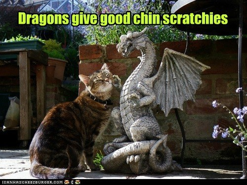 captions,Cats,chin,dragon,friend,pet,scratch
