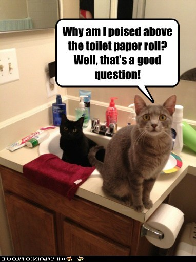 Why am I poised above the toilet paper roll? Well, that's a good question!
