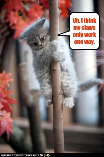 captions Cats claws climb halp pole stuck trapped tree up - 6439047424