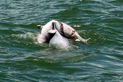 dead dolphin calf,dolphin mourning,Heartbreaking Tearjerker