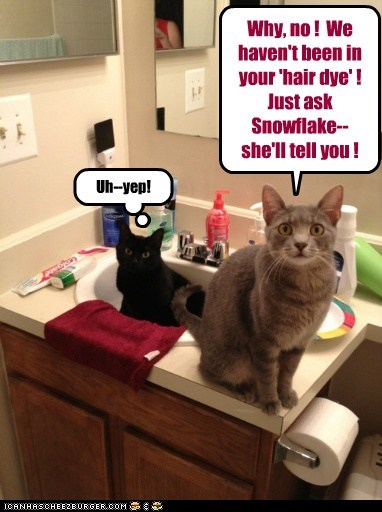 Why, no ! We haven't been in your 'hair dye' ! Just ask Snowflake--she'll tell you ! Uh--yep!