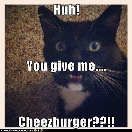Cheezburger Image 6439764736