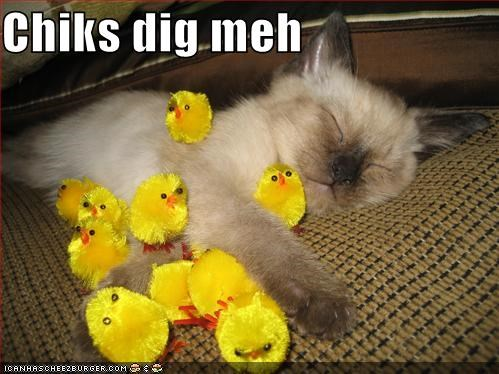 chicks,kitten,lolcats,lolkittehs,siamese,sleeping,toys
