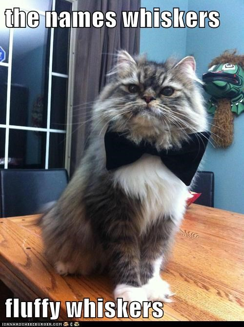 007 bowtie captions Cats james bond secret agent sexy spy - 6439854080
