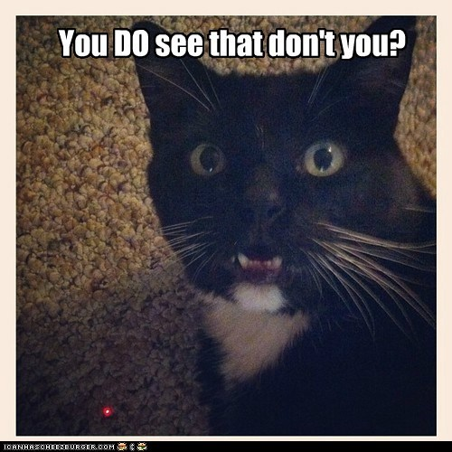 captions Cats hallucination laser red dot seeing things
